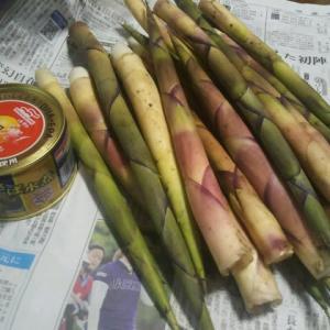 根曲がり竹シーズンの到来