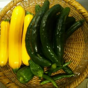 夏野菜が収穫できるようになりました。