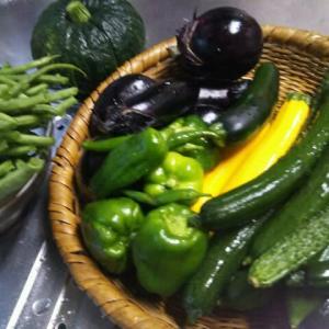 我が家の家庭菜園の一日の収穫量