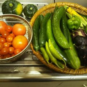 夏採り野菜が終わりました。