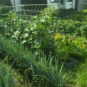家庭菜園の草取りが大変です。