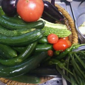 梅雨は明けましたが、我が家の家庭菜園は晴れません。