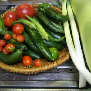 夏野菜の収穫が終わりつつあります。