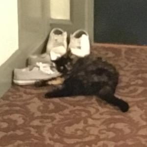 猫の夜遊び:廊下で隣人スニーカーで