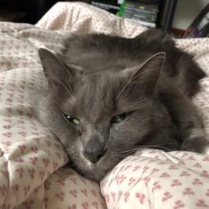 猫ミーコとホリデースターバックスコーヒー