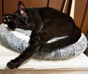 黒猫の足は「ややこしい」