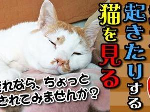 寝たり起きたりする猫を見る
