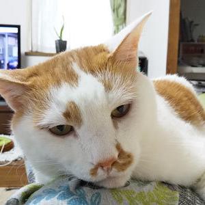 猫毛玉2つ