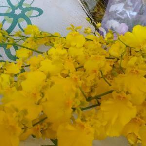 何故か、黄色の花ばかり仕入れました(^-^)