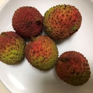 夏の果実って、山口百恵さんの歌でしたっけ?