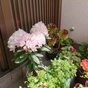 今年の花は・・・