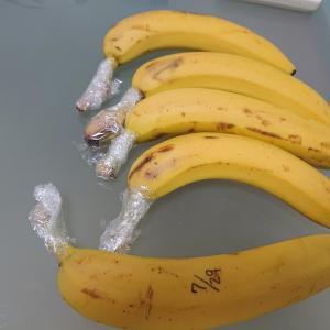 バナナの保存
