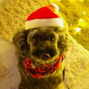 *赤いクリスマス*