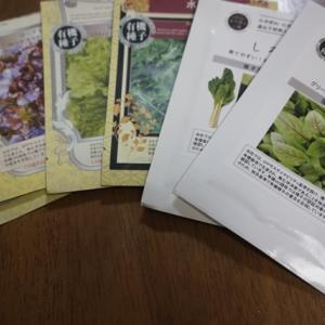秋冬野菜の有機種子の種まき色々~♪