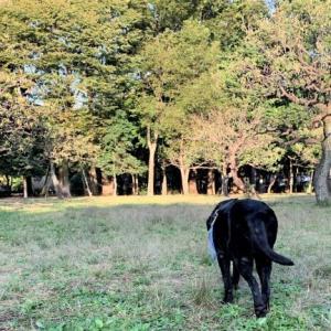 秋のK公園