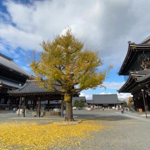 京都本山 東本願寺御影堂門に登る