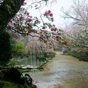 雨の吉野山 一目千本吉野桜