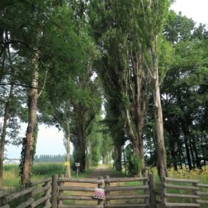 北大の看板並木