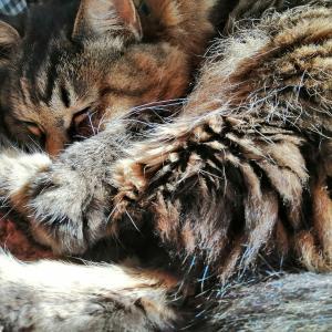 寒い日wwコタ猫暖かい日は陽だまり猫