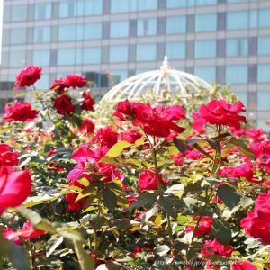 RED ROSE GARDEN2019♡ホテルニューオータニ