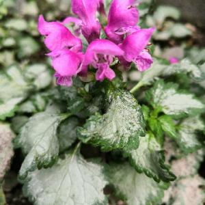 我が家の庭に「ポツンと花」・・・この花?何だろう?