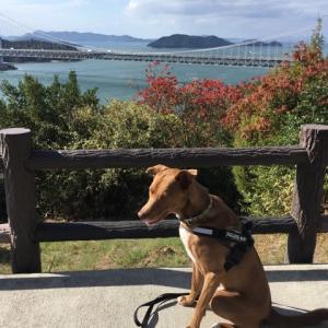 五郎と鷲羽山観光