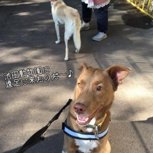 秋の遠足・犬と動物園♪