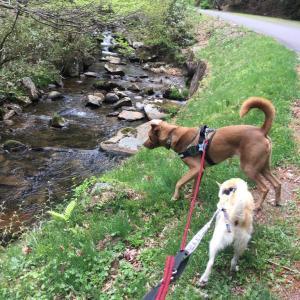 岡山県立森林公園・犬と散歩!