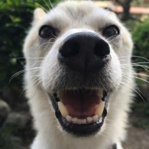 イチローの笑顔