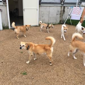岡山の保護犬譲渡会のお知らせ