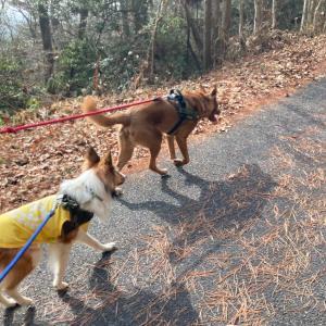 大和山(おおわさん)・犬と登山