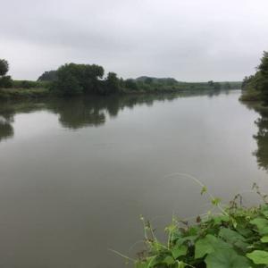 20200712 梅雨の晴れ間に北の川パトロール