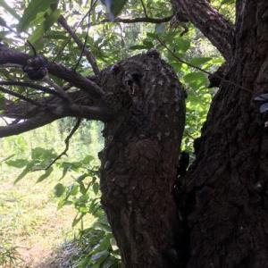 8月樹液ポイントパトロール