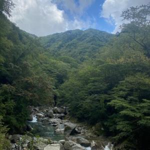 白いイワナの渓