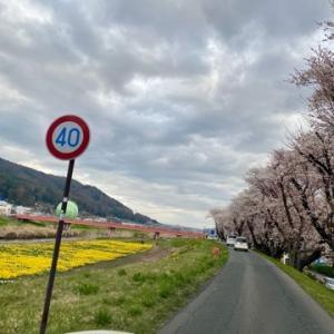 桜とドライ