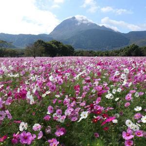 しまばら火張山花公園(島原市上折橋町)