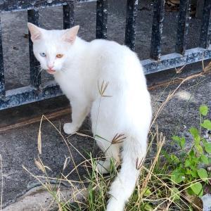 珍しい猫ちゃんに出会った!