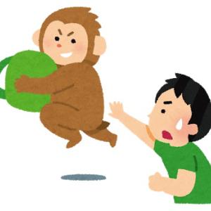 猿を眺めて