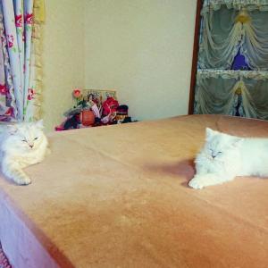 愛猫★まったりのんびり♪くつろぐゆきちゃんとレオくん