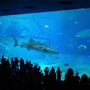 本部町 沖縄美ら海水族館#2