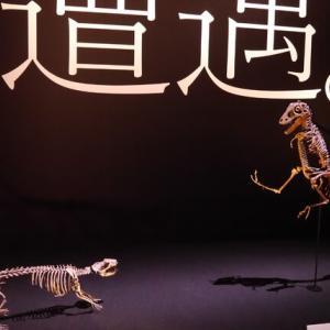 パシフィコ横浜 恐竜科学博に行ってきました! #2