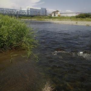 酒匂川でガサ