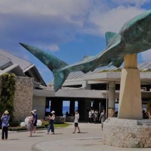 本部町 沖縄美ら海水族館#1