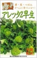 アレッタ2種(別名すずなりブロッコリー)の種まきから育苗