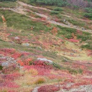 北海道から紅葉の便りが届きました