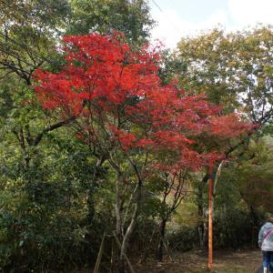 紅葉の花貫渓谷で自然浴☆旅2日目