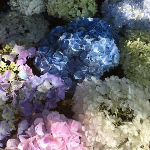 はじめての花水舎は綺麗だなぁ☆空知神社
