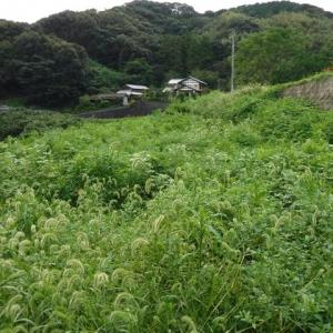 棚田跡草刈り