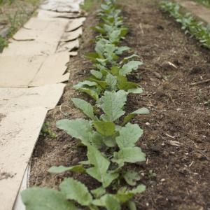 数年ぶりの野菜畑