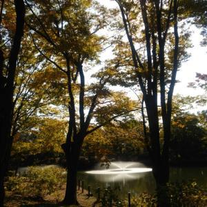 チビと散歩~紅葉を楽しみつつ歩いた~